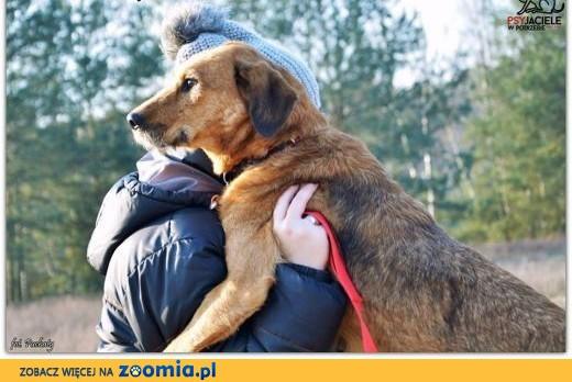 LEJLA tak sympatycznego jak Ona psa nigdzie indziej nie ma,  dolnośląskie Wrocław