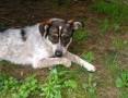 Petsitterka - opieka nad zwierzakami podczas nieobecności właścicieli,  śląskie Żory