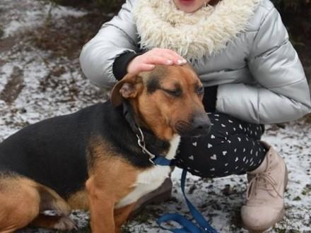 Młody Szagi  wesoły  domowy psiak do adopcji!   Kundelki cała Polska