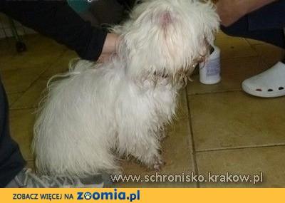 Znaleziono psa w okolicy Ronda Mogilskiego,  małopolskie Kraków