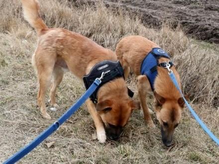 Grzeczny  przyjazny Junior  młody psiak szuka DOMU na zawsze!