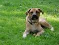 Bąbel, młodziutki, wesoły psiak szuka domu!