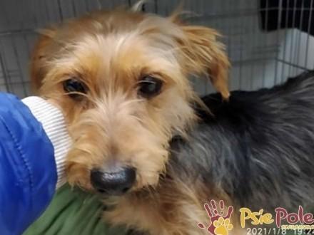 ORDEREK-śliczny  miły  kochany mały psiak-szukamy domu  adopcja
