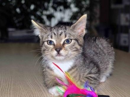 Koteczka Lili szuka domu