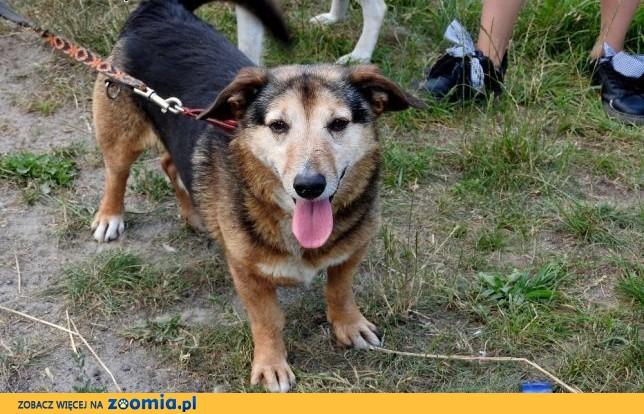 Cudak starszy psiak szuka domu,  dolnośląskie Wrocław