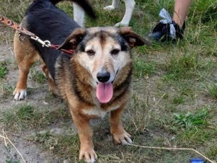 Cudak starszy psiak szuka domu   dolnośląskie Wrocław