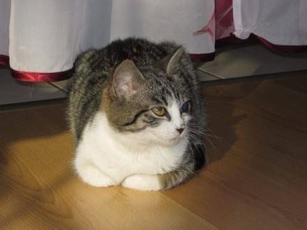 Młoda  wesołą kicia  czysta  samodzielna kotka do pokochania