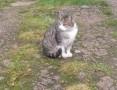 Cudowna kotka, wyprawka i transport gratis!,  świętokrzyskie Kielce