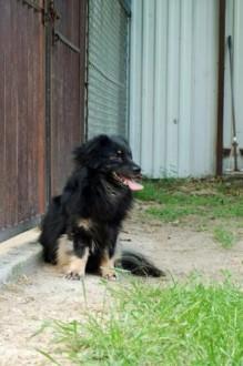Krasnal nieśmiały psiak szuka domu  choćby tymczasowego!