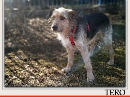 3 letni średni 15 kg przytulaśny kontaktowy łagodny wesoły psiak TEROAdopcja   pomorskie Gdańsk