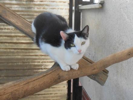 (Ma)Lutka ;#8211; drobna  czarno-biała koteczka   warmińsko-mazurskie Olsztyn