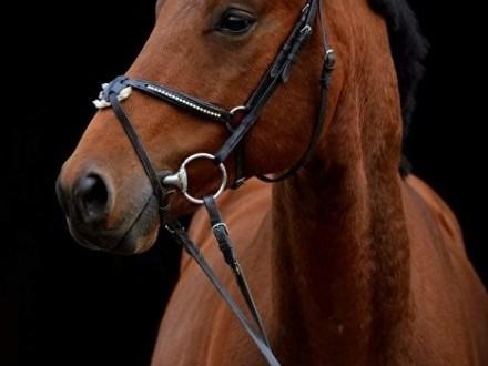 Wałach 5 lat  niemiecki koń sportowy