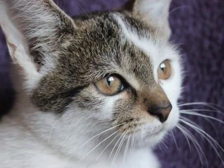 Roksy  3 miesięczna koteczka szuka domu!