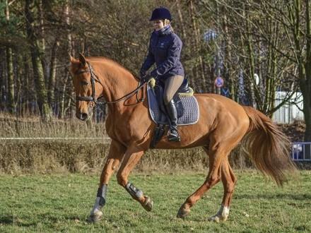 Kupie kuca grE lub małego konia