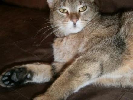 Finka  wzorowa koteczka szuka domu!   Koty pospolite cała Polska