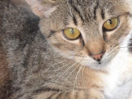 BEHEMOTEK-młody  piękny  nieśmiały kotek szuka troskliwego domu  adopcja