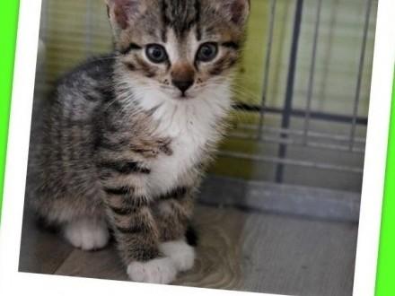PILNE ! Schroniskowe kocięta o różnym umaszczeniu bardzo potrzebują domów