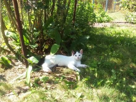 Kotki z Kurowic