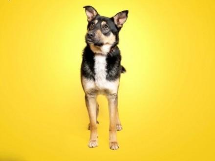 Sony  młody psiaczek szuka domu!   Kundelki cała Polska
