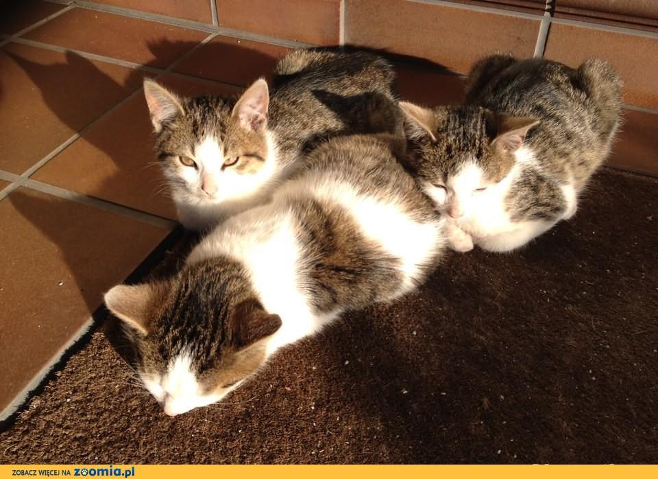 oddam kotki .4 miesieczne,oraz kota 1 rocznego