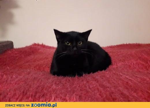 9 miesięczna kotka Czarnusia szuka domu,  łódzkie Łódź