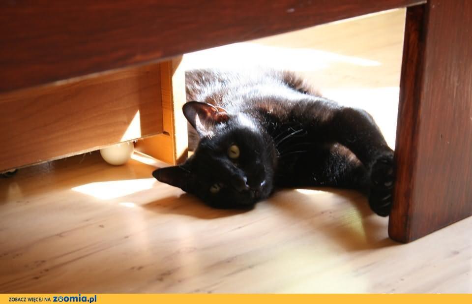 Wysterylizowana kotka