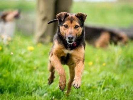 Pokochaj wspaniałego psa  Walik Ci miłość da :)   lubelskie Lublin