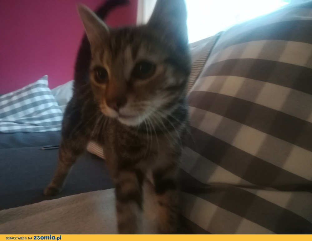 Koteczka Pinezka szuka domu