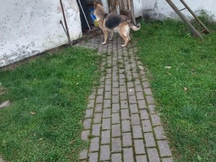 Oddam psa za darmo Toruń