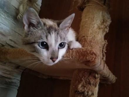 Zaginęła kotka Merlin