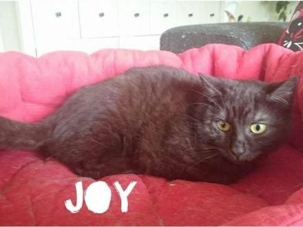 Joy szuka domu