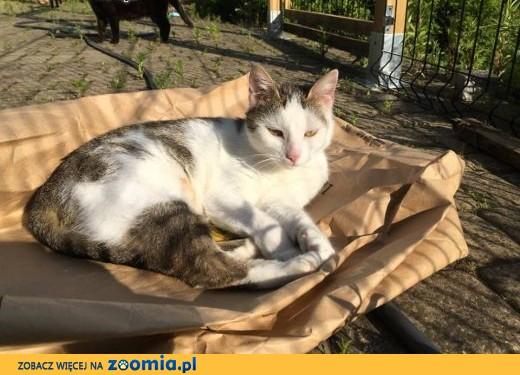 Gabrysia to koteczka o zrównoważonym, wspaniałym charakterze,  mazowieckie Warszawa