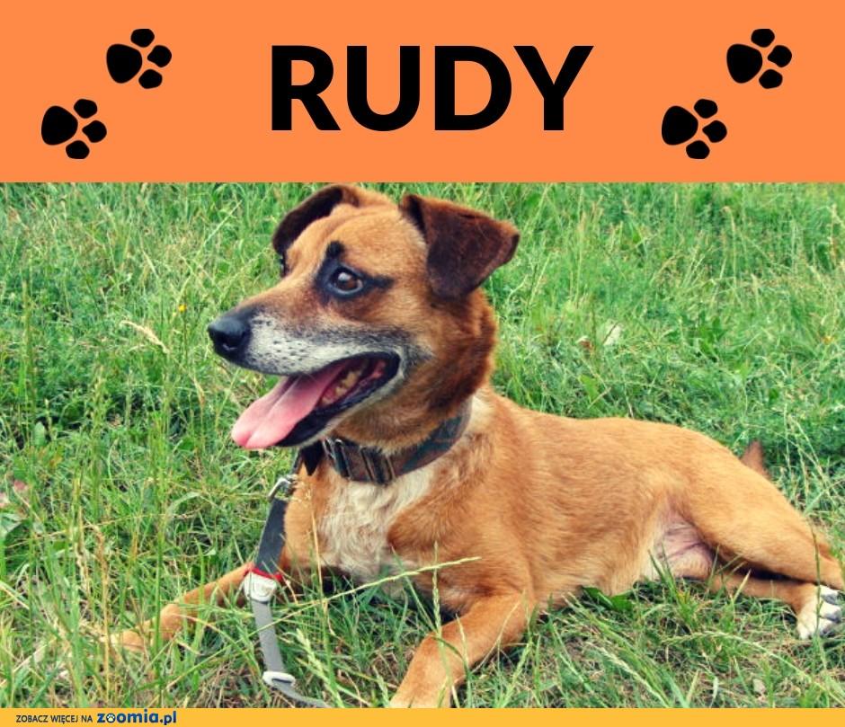 Rudy-wesoły, pogodny,szczepiony,towarzyski psiak,7lat,10kg