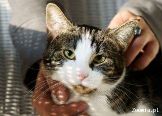 BASIA, BAŚKA, BASIEŃKA - mała kotka, która szuka domu..