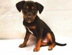 Reksio - psia dziecina szuka domu :)