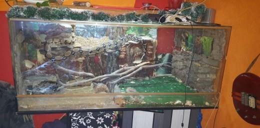 sprzedam dwa węże boa wraz z terrarium   śląskie Czeladź