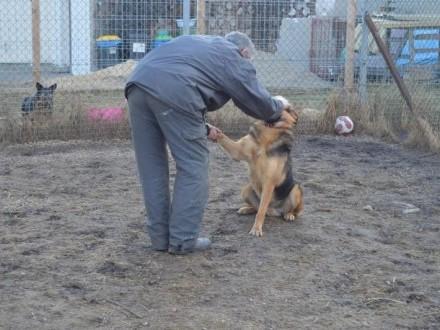Towarzyski, łagodny psiak szuka domu!