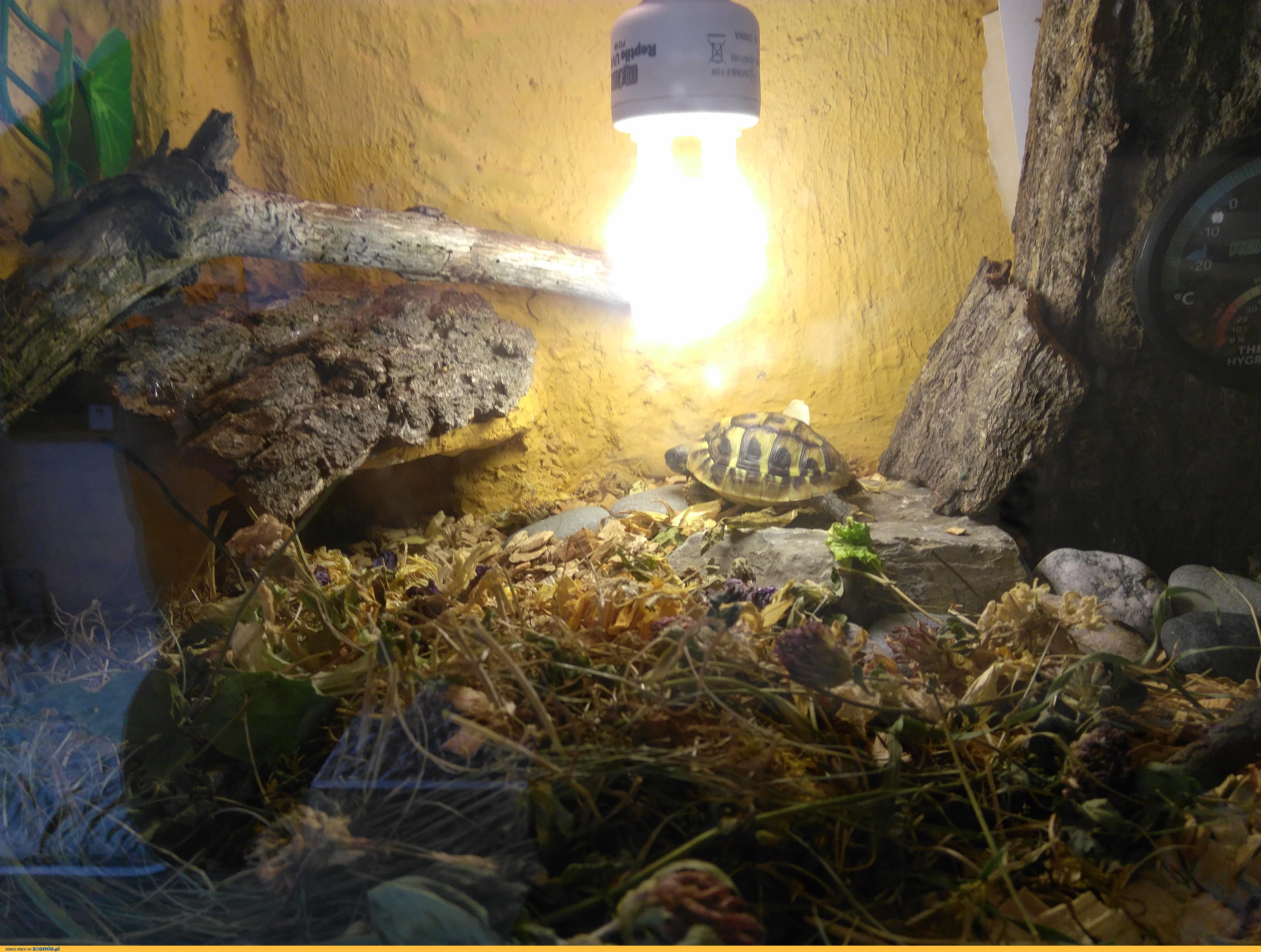 terrarium z wyposażeniem + żółw