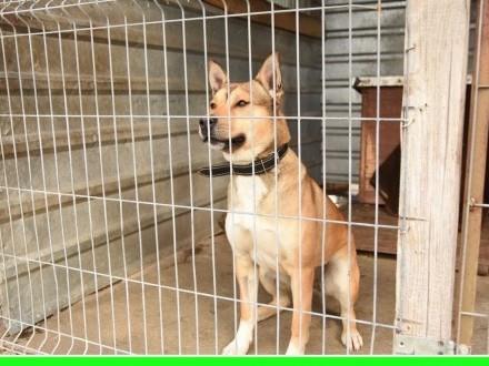 Duży młody energiczny bardzo inteligentny pies NEROADOPCJA   dolnośląskie Wrocław