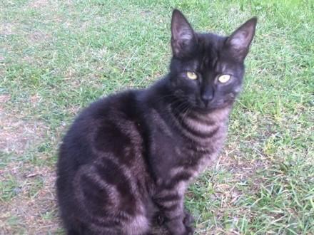 Młode: kocurek i kotka szukają domów