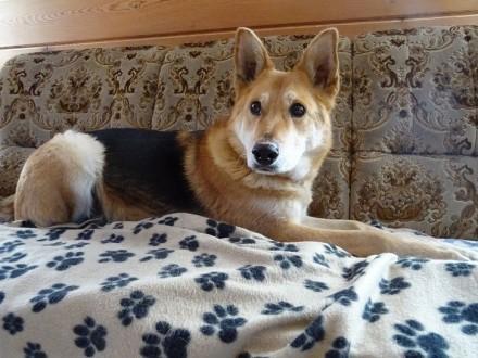 Barni, łagodny, niekłopotliwy i grzeczny psiak do pokochania!