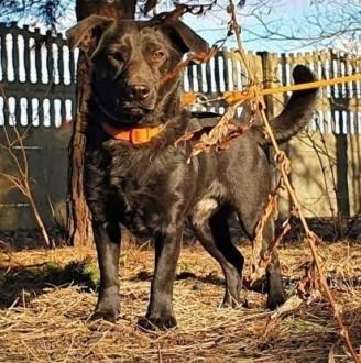 KRUSZEK - przerażony psiak, cudem uratowany szuka domu,  mazowieckie Warszawa