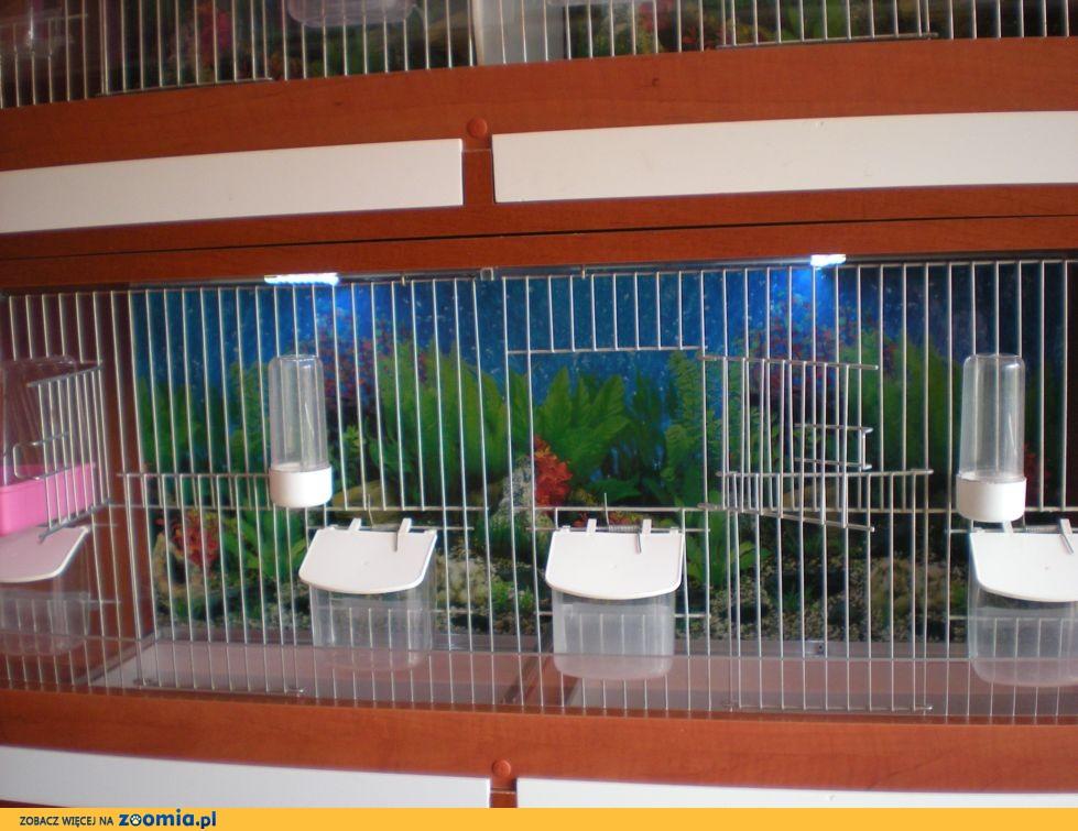 Regały hodowlane dla ptaków egzotycznych z pełnym wyposażeniem i oświetleniem LED
