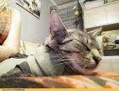 Faith, kocha ludzi i zwierzęta, cudowna kotka do adopcji!