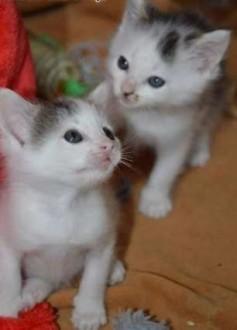 2 malutkie kociaki do adopcji    mazowieckie Warszawa