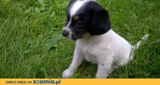 Ogromnie Oddam za darmo szczeniaki, małopolskie Kęty Kęty « Dog Adoptions VV89