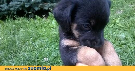 Fantastyczny Oddam za darmo szczeniaki, małopolskie Kęty Kęty « Dog Adoptions RF12
