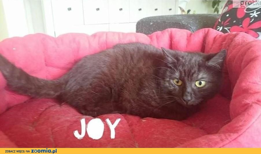 Joy szuka domu, który da jej miłość