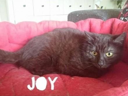 Joy szuka domu  który da jej miłość