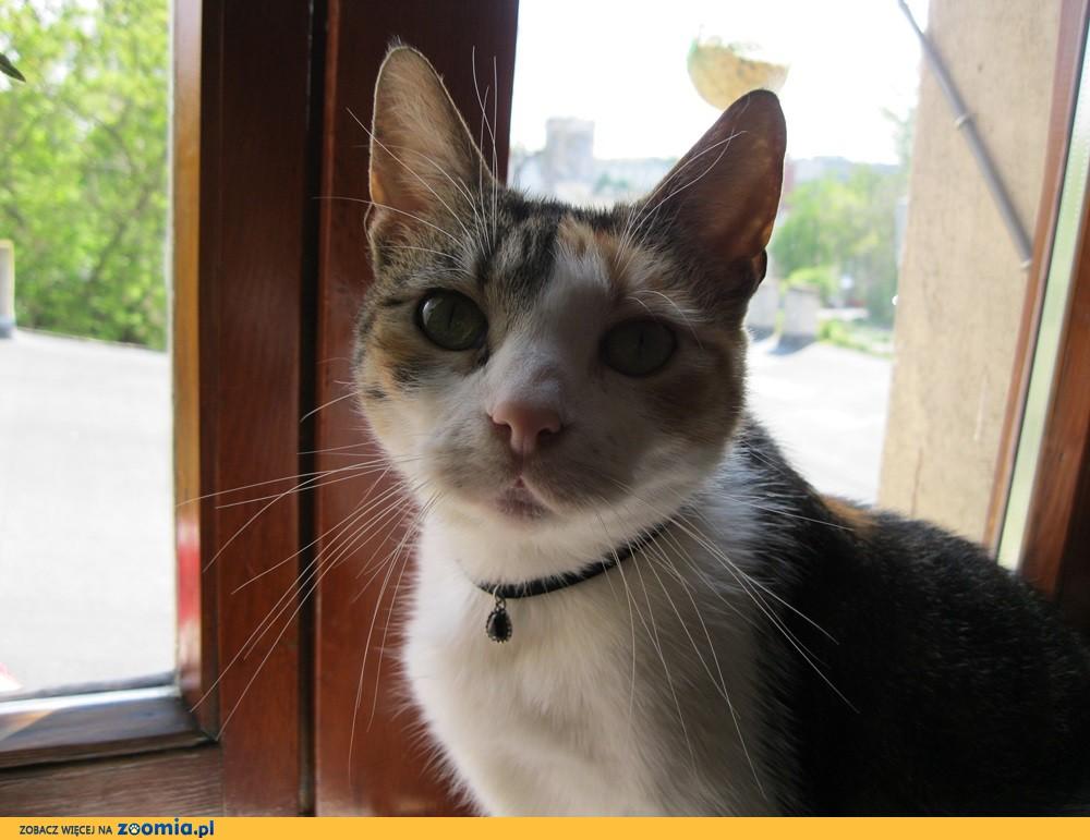 5 letnia kotka trikolorka szuka domu